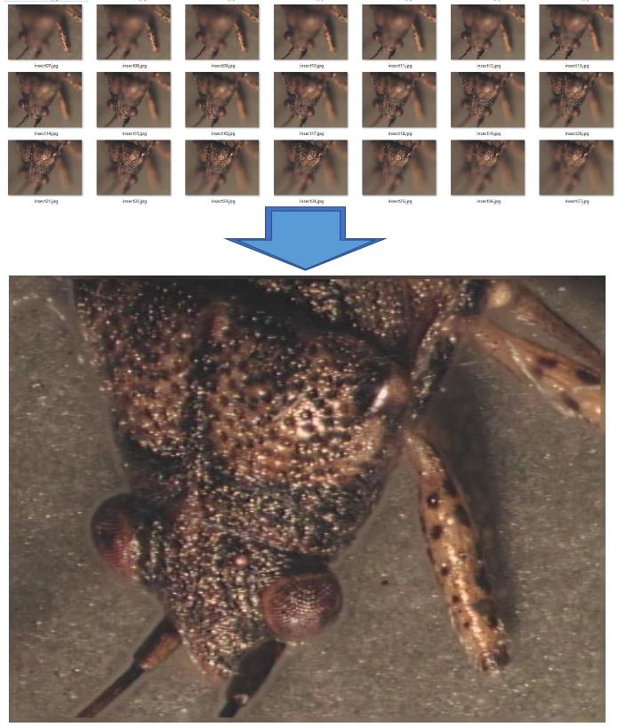 深度合成 昆虫