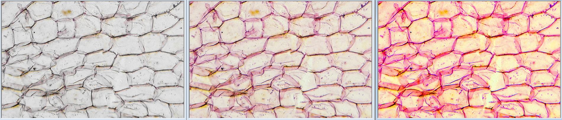植物細胞_彩度