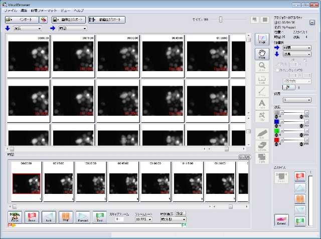 Mibro_(Multi).jpg